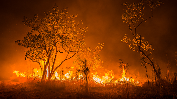 A bush fire burns through shrub land.